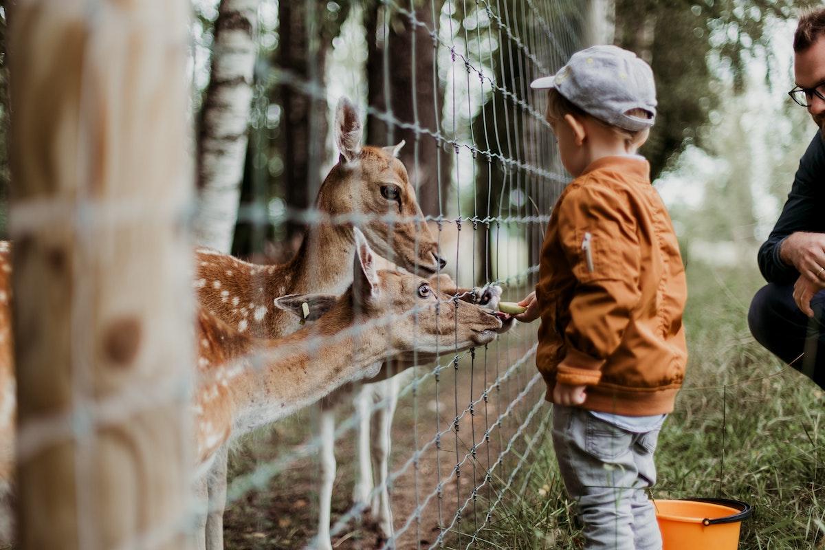 Zoos In Der Krise