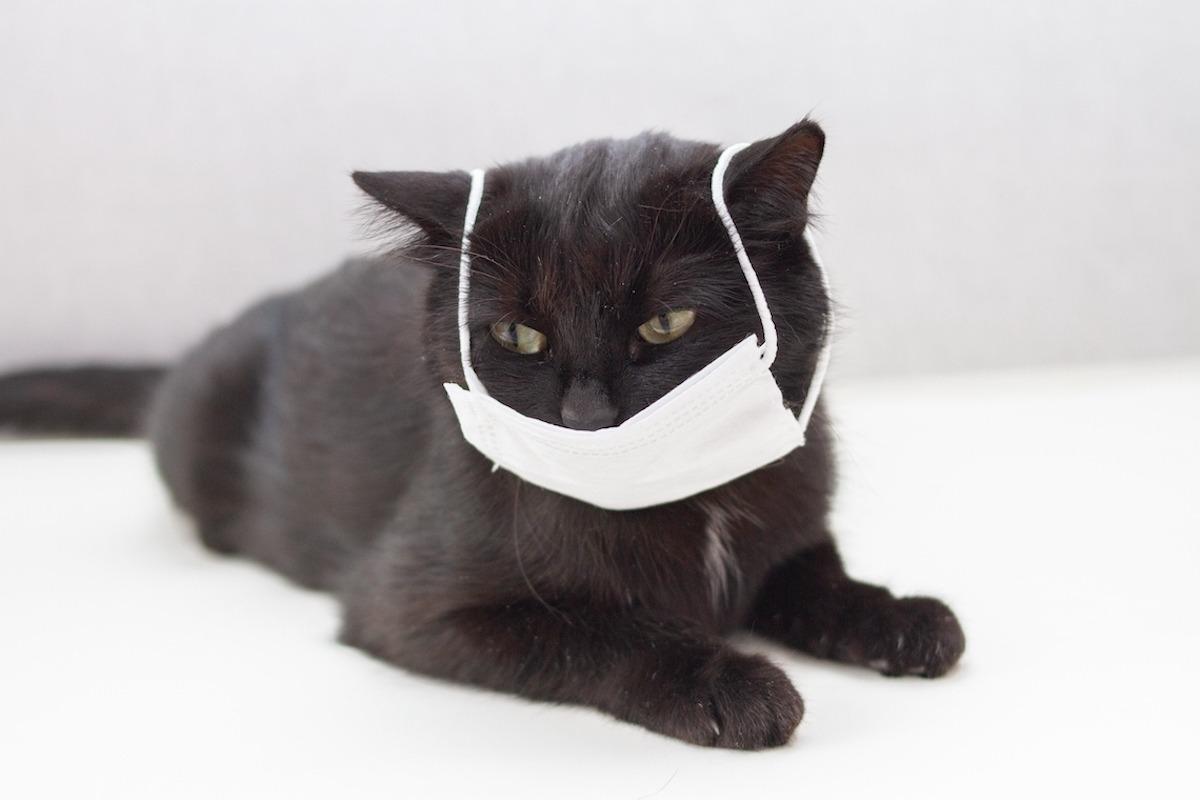 Coronavirus Katze Ansteckung