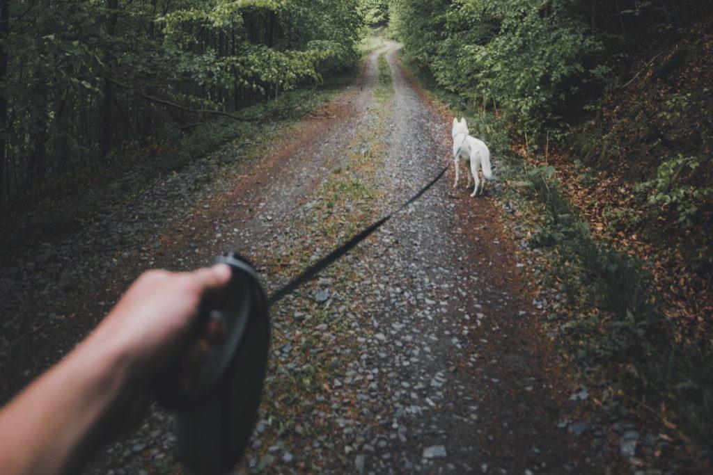 Ausgangssperre Hund