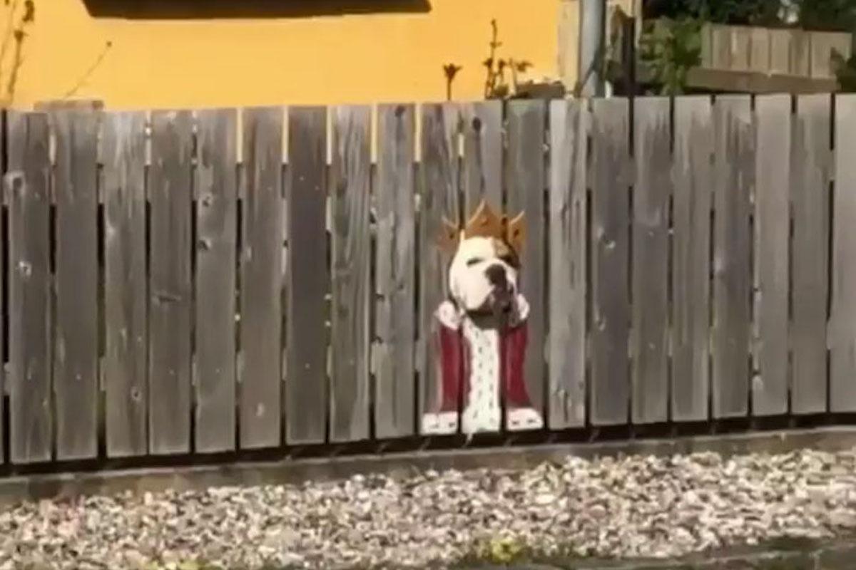 Holzlatten Zaun Bemalen