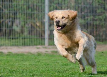 5 Vorurteile über Hunde aus dem Tierheim – und warum sie falsch sind