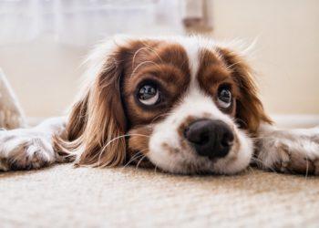 Hunde vergeben Menschen – aber auch ihren Artgenossen?