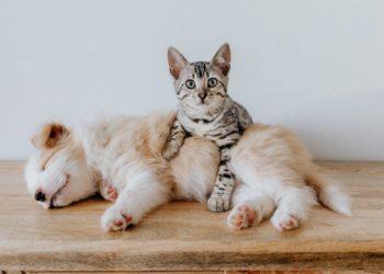 7 Beweise dafür, dass Hund und Katze beste Freunde sein können
