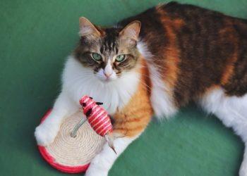 Was ist besser: Katzenpension oder Katzensitter?