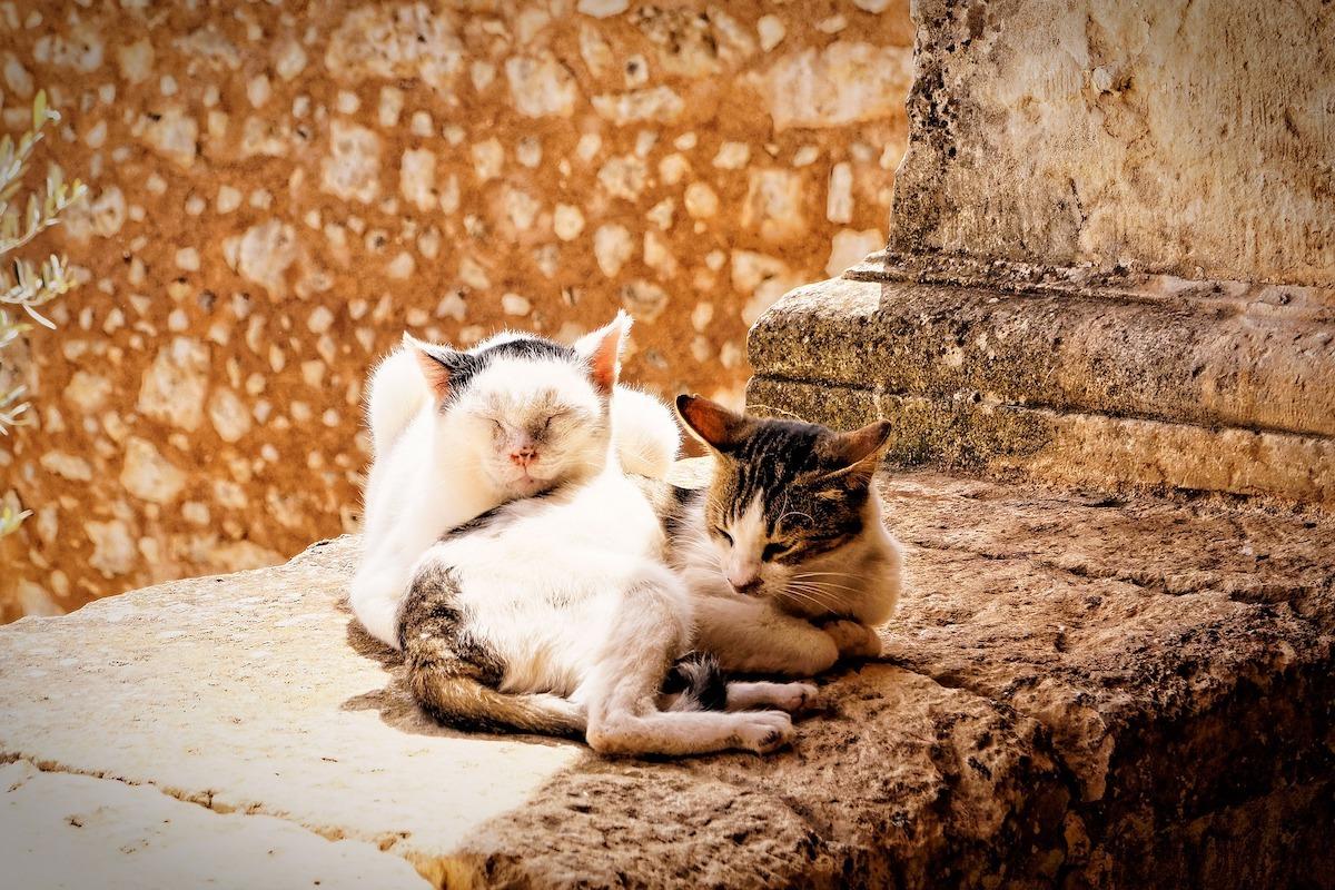 Deux chats câlins sur mur de briques