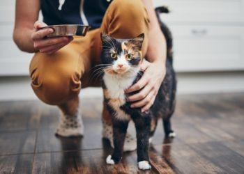 Das Futterhaus oder Fressnapf: Welches Katzenfutter ist besser?