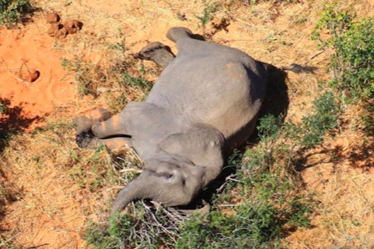 Elefantensterben Botswana Ursache