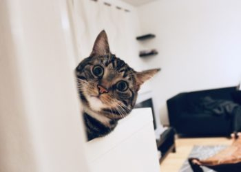 Weckt Dich Deine Katze nachts auf? Das kannst Du tun
