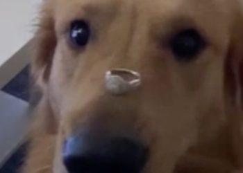 Video: Hund denkt, Verlobungsring ist ein Leckerli – und frisst ihn