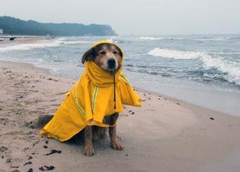 Ferientipps: Urlaub mit Hund in Schleswig-Holstein