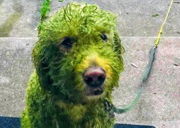 Das Internet diskutiert: Warum ist dieser Hund so grün?