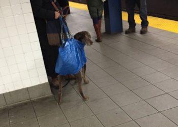 New York: Hundeverbot in U-Bahn macht erfinderisch