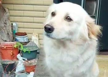 Drama-Queen: Dieser Hund hasst es, wenn Herrchen zur Arbeit geht