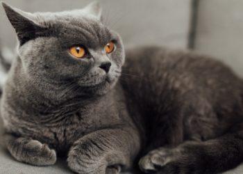 So zeigt Dir Deine Katze, dass sie gestresst ist