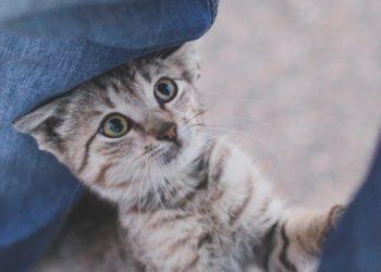 Warum es ein gutes Zeichen ist, wenn Dir Deine Katze eine Kopfnuss gibt