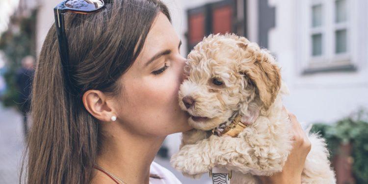 Heute ist Welthundetag! Aber warum lieben wir Hunde