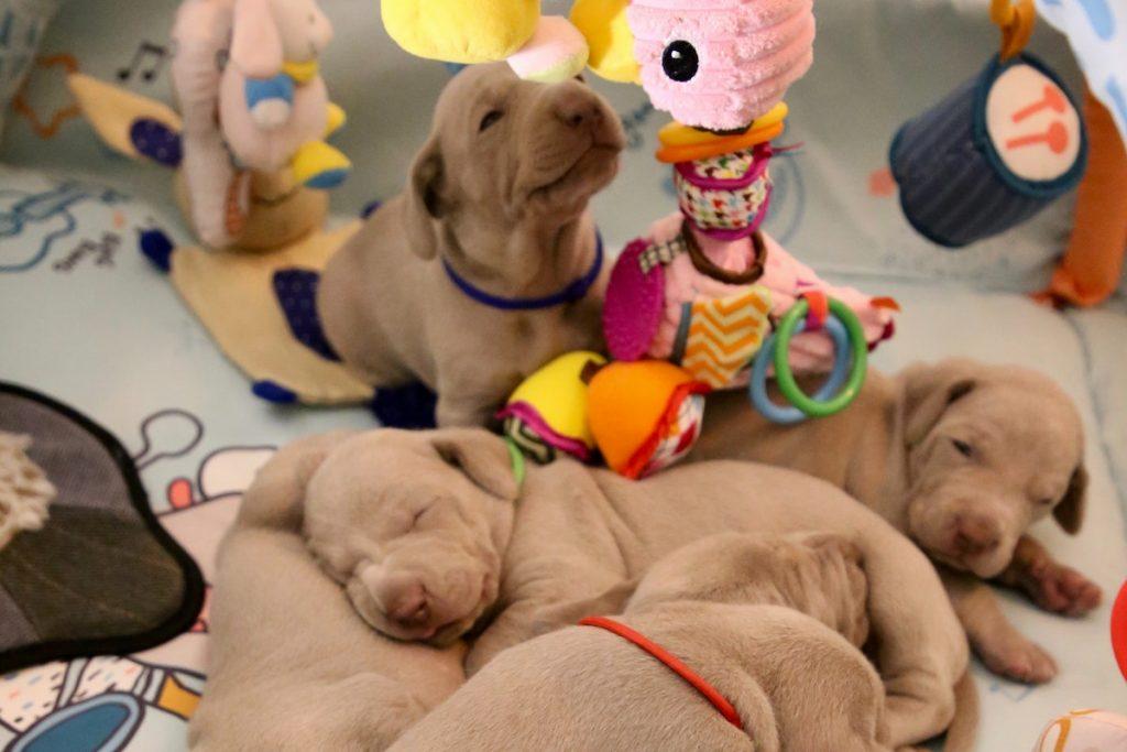 Baby Schreit Beim Pupsen