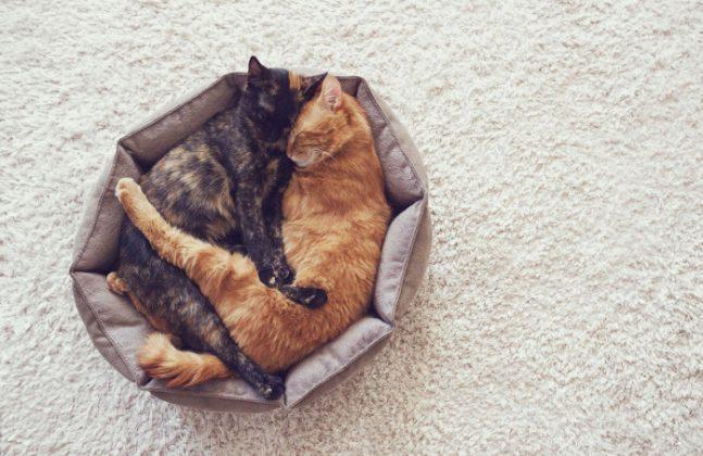 Wenn sich katzen kennenlernen