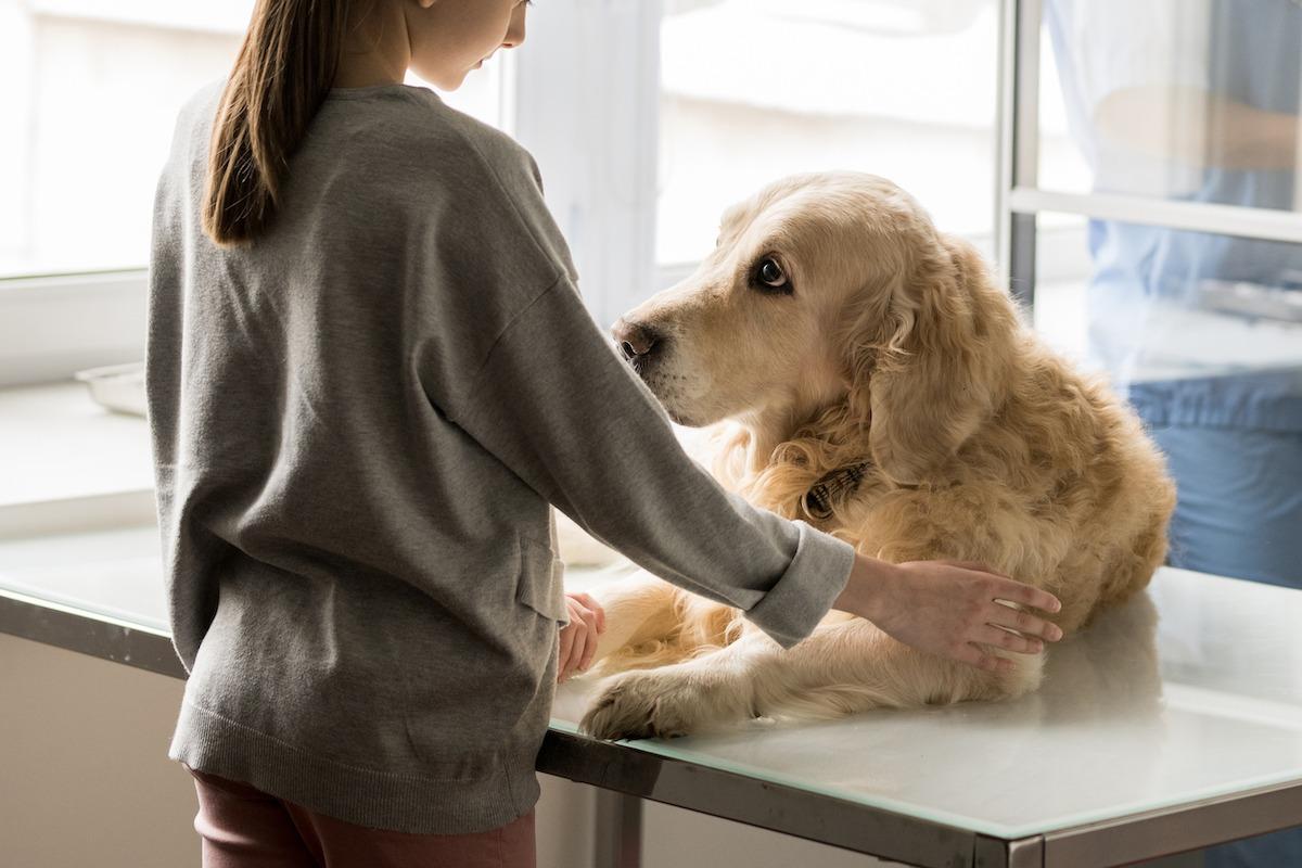Gestorben worte hund tröstende 27 Gefühlvolle