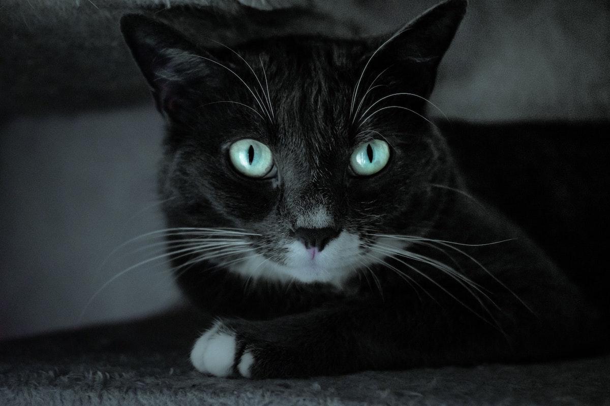 Selten blaue augen Augenfarbe: Überraschende