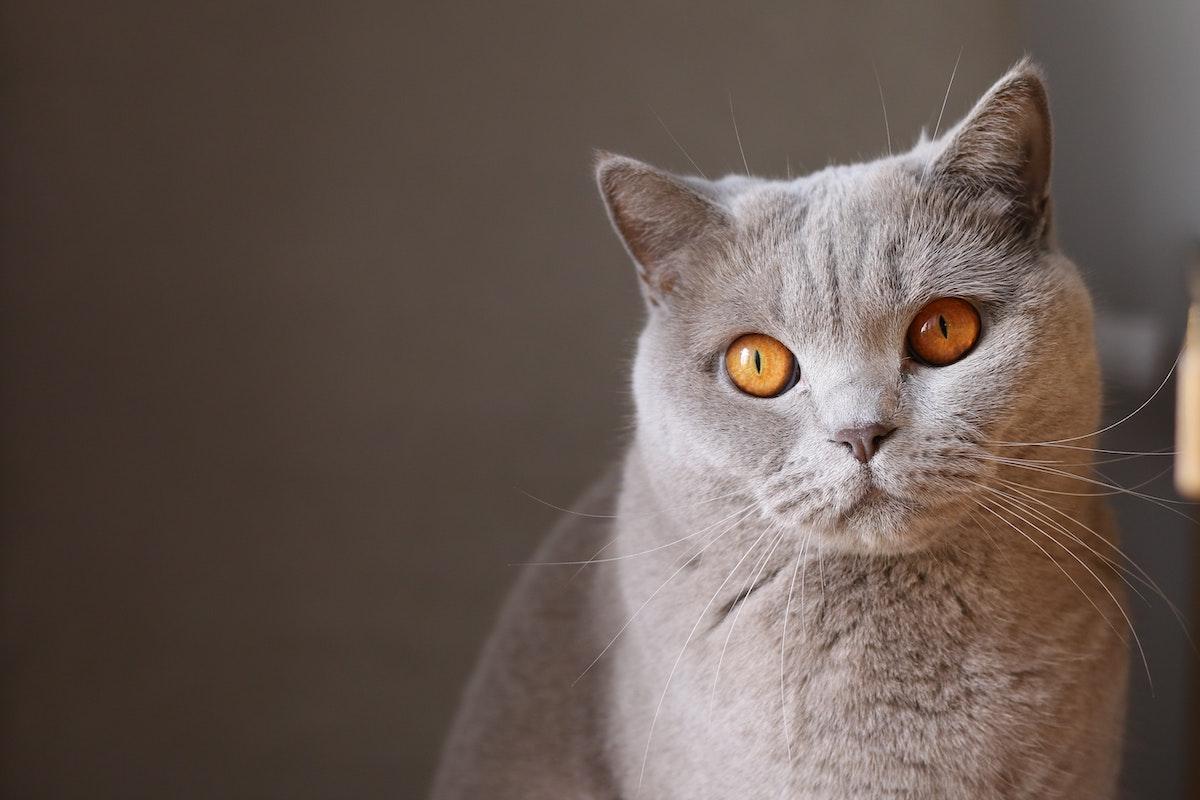 Augen häufigkeit braune Grüne Augen: