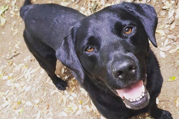 Dank Tinder: Frau findet Labrador nach drei Jahren wieder