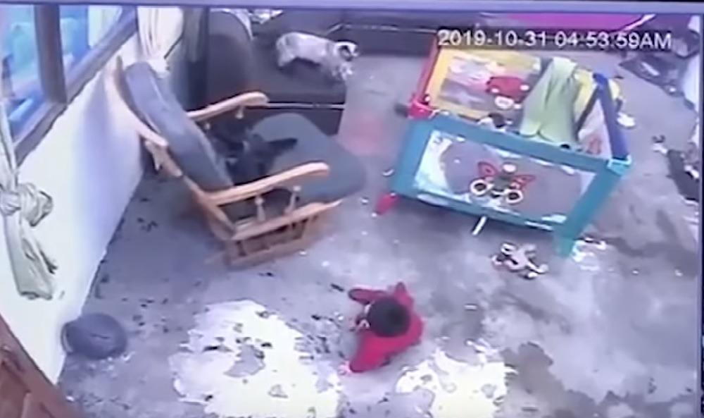 Baby vor Treppensturz gerettet: Katze aus Kolumbien ist